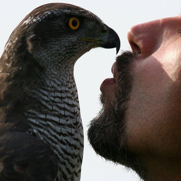 Czech-Falconry-Birds-Hunting-Bohemian-Photo-103