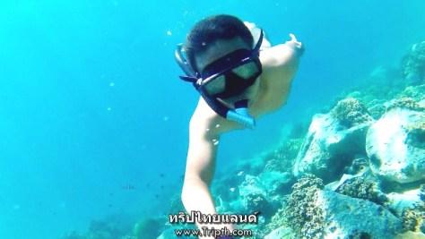 ดำไปตามแนวปะการัง