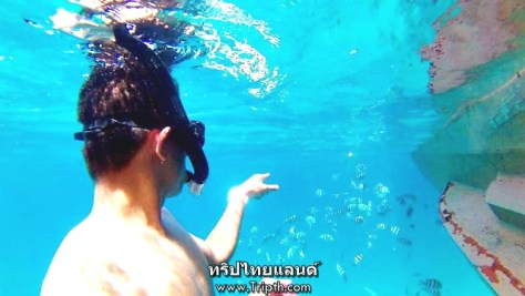 ปลาตามาเป็นร้อย