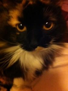 Our cat, Sasha