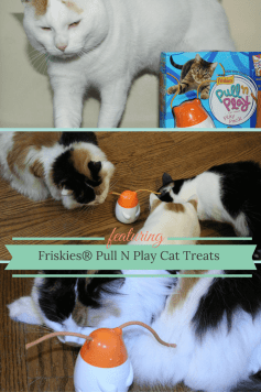 My cat would love these Friskies Pull N Play cat treats! Definitely going on my next grocery list.