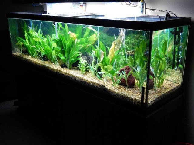 125 Gallon Planted Aquarium | Tropical Fish Site