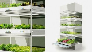 what-if-you-could-grow-fresh-organic-veggies-herbs-right-in-your-kitchen-you-can 2