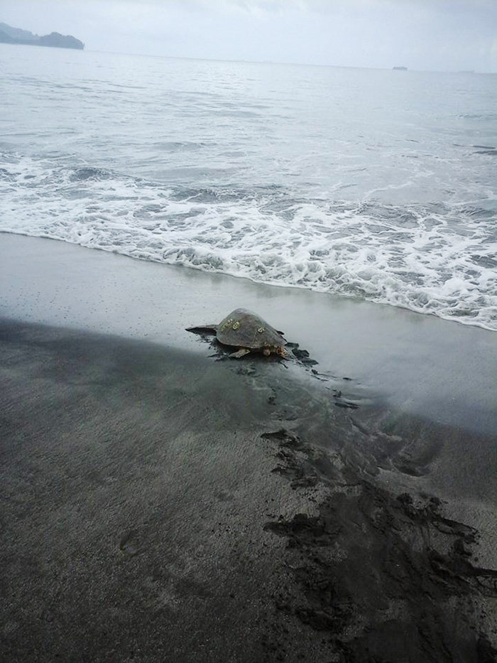Man Buys Turtles From Food Market And Releases Them Back To The Sea.-2