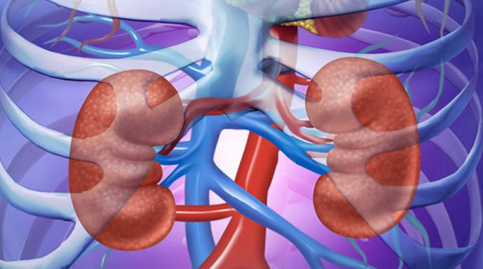 3 Herbs & 6 Foods You Can Use To Properly Cleanse Your Kidneys