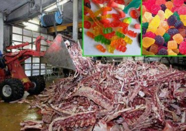 after-seeing-how-gummy-candies-are-really-made-youll-never-eat-them-again-disturbing-graphic