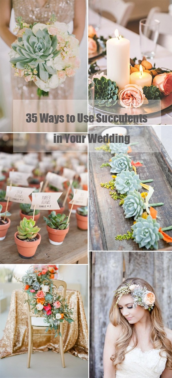 wedding favors succulent wedding favors 35 creative ways to use succulent plants in your wedding