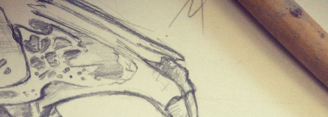 Sketching Animal Skulls