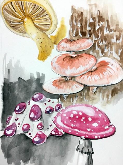 four-fungi