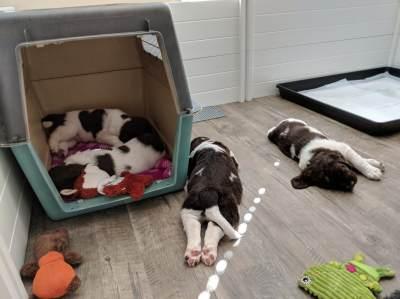 THE HOME OF QUALITY DRENTSCHE PATRIJSHONDEN - Dutch Dog Blog