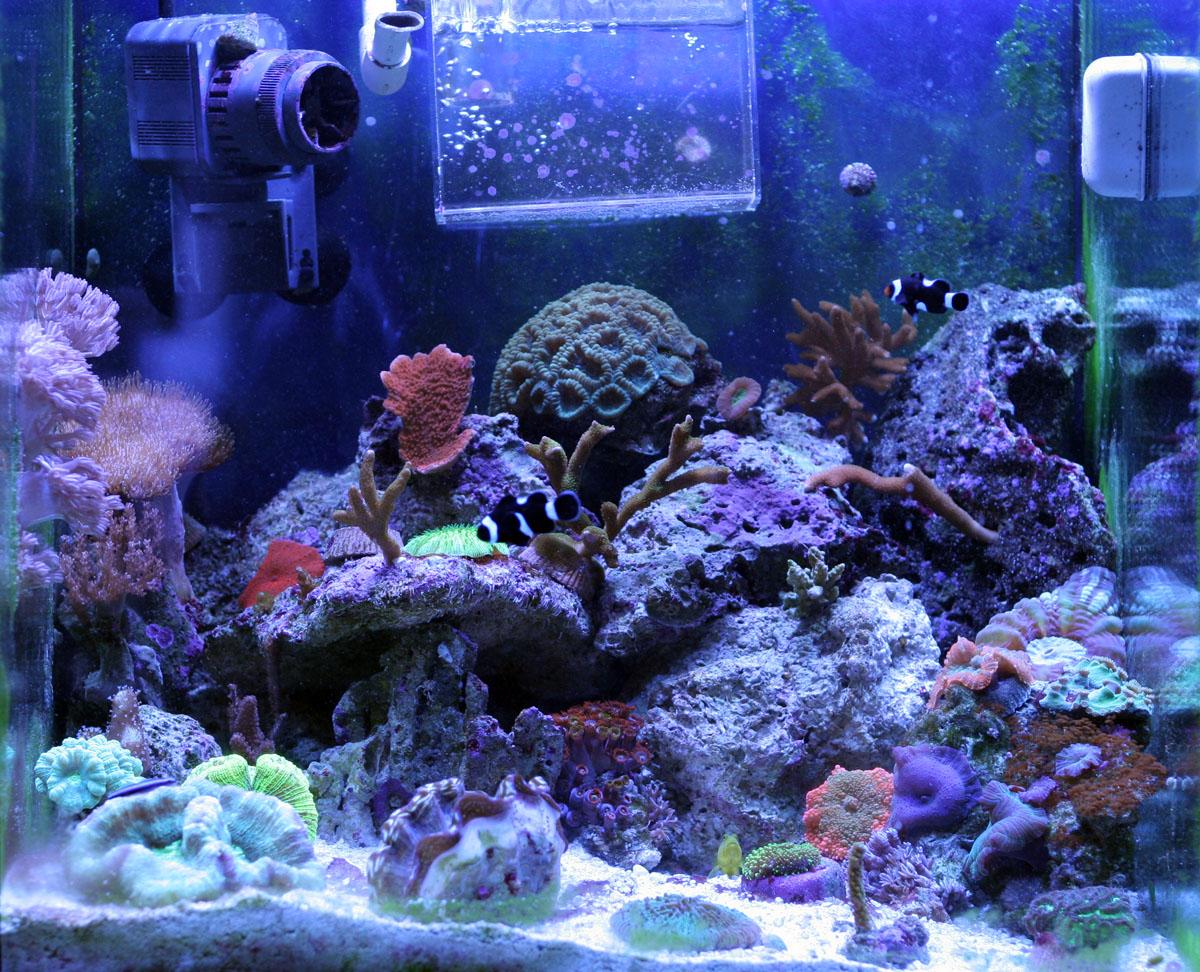 30 gallon saltwater aquarium tyler merrick for Saltwater tank fish