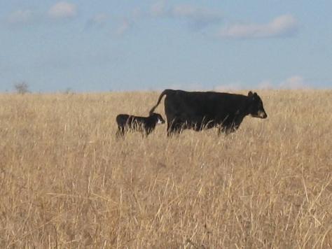 Kansas wildlife