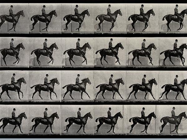 43221-A_cantering_horse_and_rider_Eadweard_Muybridge_1887