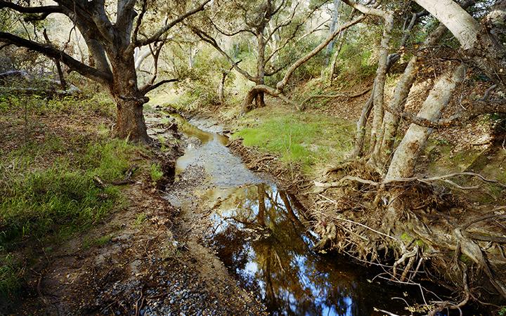 Dawson Los Monos Canyon Reserve