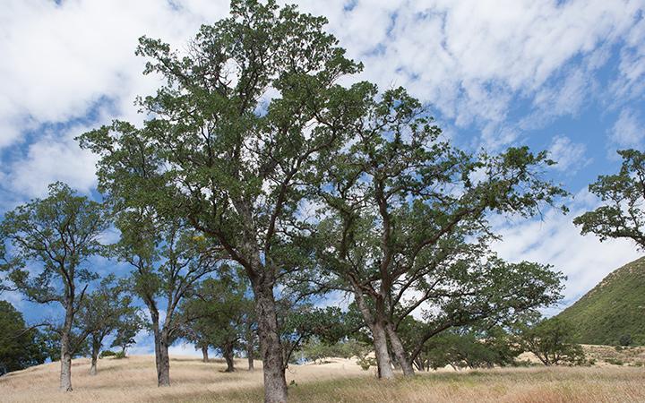 Stebbins ColdCanyon Reserve