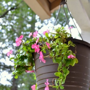 How to Save Money on Perennials and Hanging Plants
