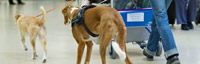 Pets at the Airport