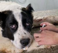 Pet Travel Vaccinations