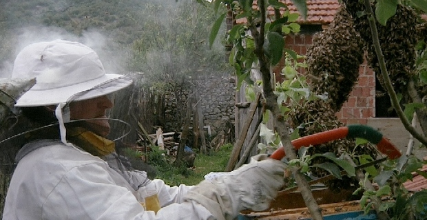 """Honey on Wounds"", a film about Kosovo War women"