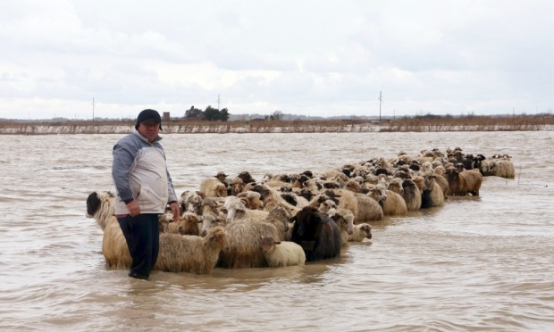 A man stands with his flock of sheep in floodwaters in the village of Darzez near the city of Fier on 2 February 2015. Soldiers were deployed in Albania on Monday to help rescue villagers and strengthen flood barriers. Photograph: Arben Celi/Reuters