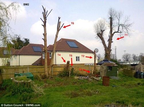 Dënohet shqiptari i cili preu pemët e Bashkisë së Suttonit në Angli