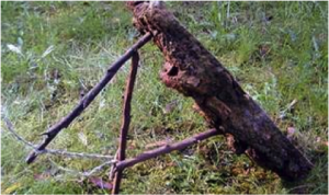 survival skills showing deadfall trap