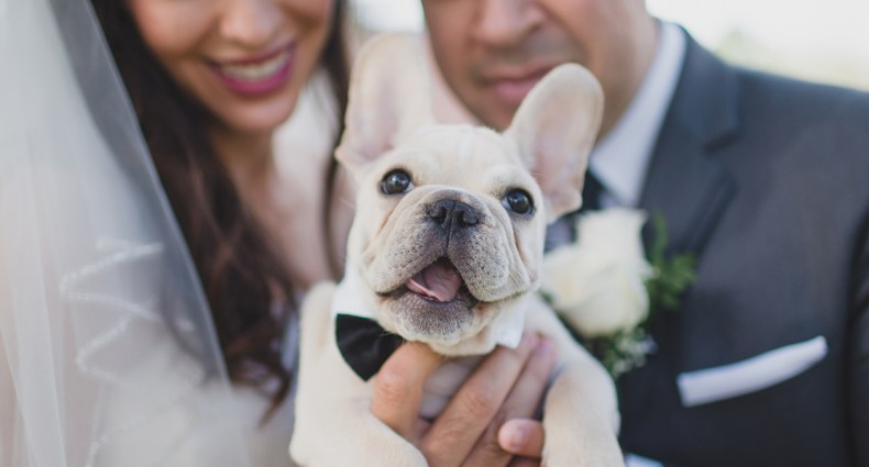 15 adorable dogs at weddings