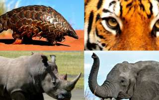 Photo: Wildlife. Credit: UNODC