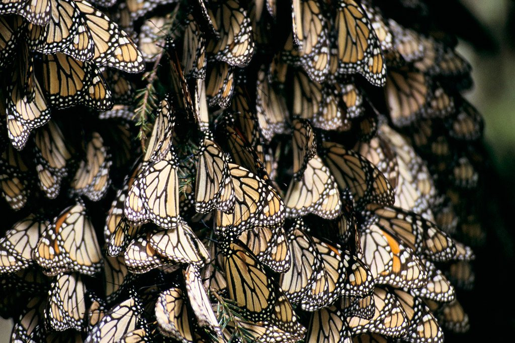 Butterflies in Mexico. Photo: World Bank/Curt Carnemark