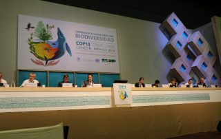 Opening of the High-Level Segment of the UN Biodiversity Conference in Cancun, Mexico. UN Photo/ Florencia Soto