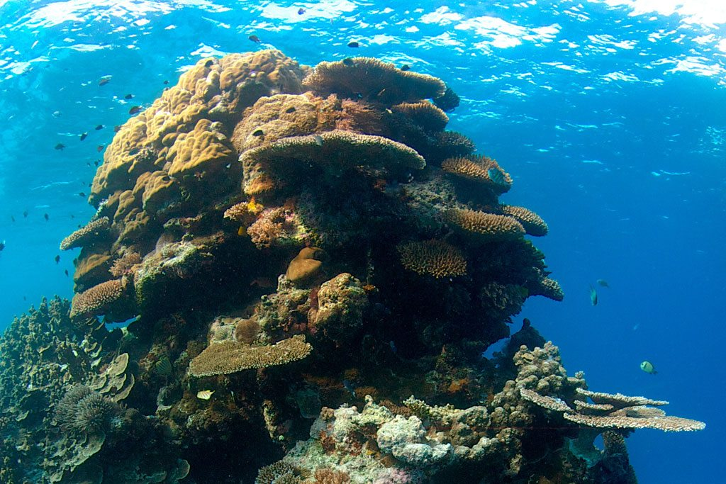 Photo: Coral reef
