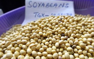 Soybeans for sale. A 14 per cent expansion in soybean area, mainly in South America, is projected. Photo: FAO/ Pius Ekpei