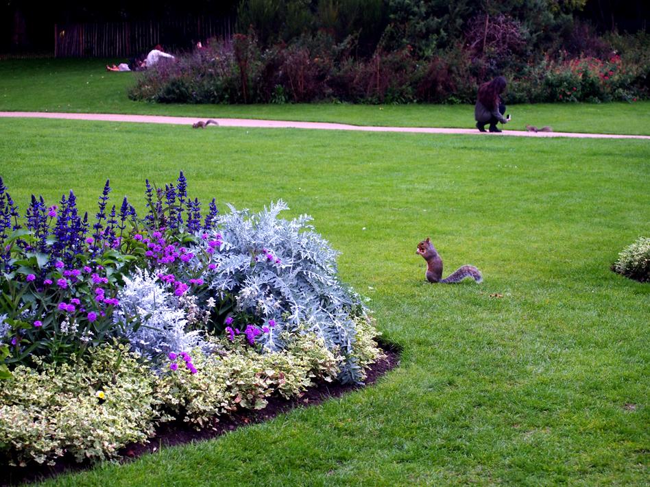 qué ver en Hyde Park ardillas