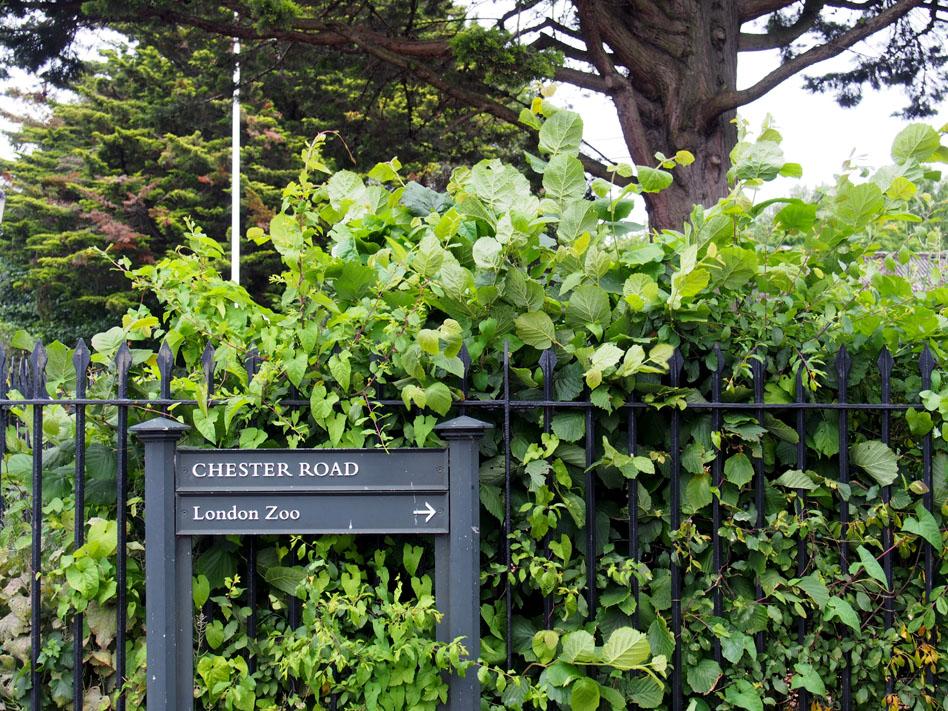 Regents Park 10 cosas que ver señal theater