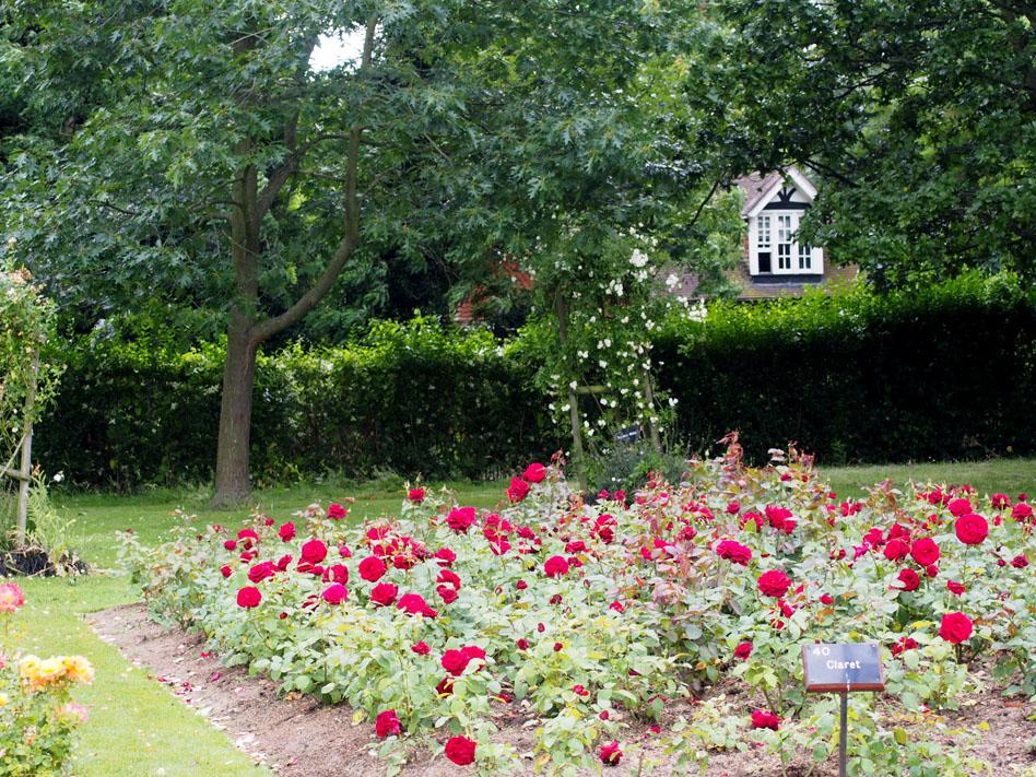 Regents Park 10 cosas que ver rosaleda casita