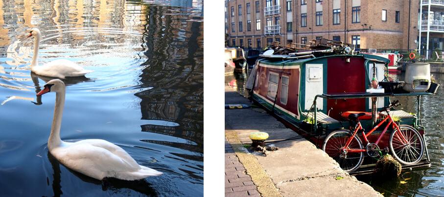 Barrio de islington canal cisnes