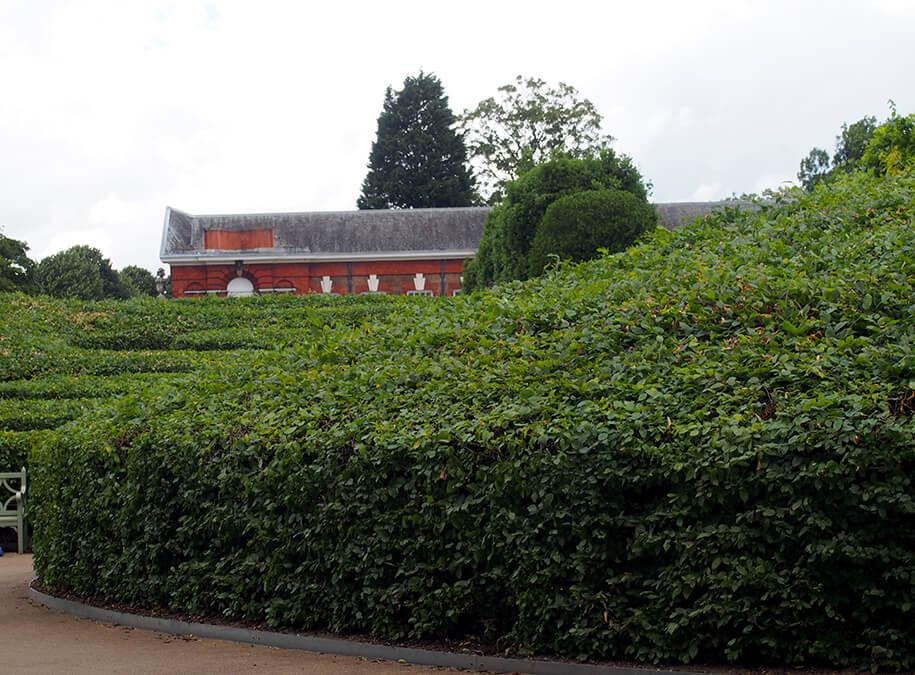 El camino de seto que lleva a The Orangerie.
