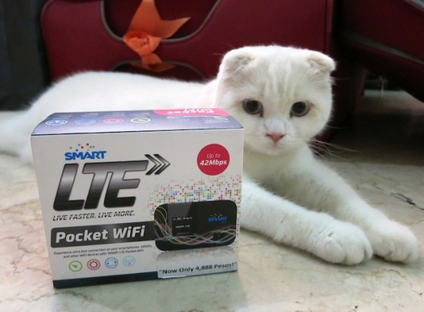 Smart LTE Pocket WiFi with our cute Scottish Fold cat, Rumfold!
