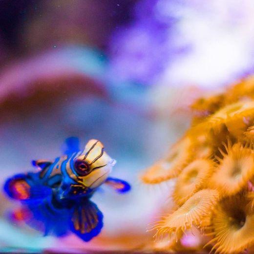 Im missing the great Chicago aquarium Prepare for a streamhellip