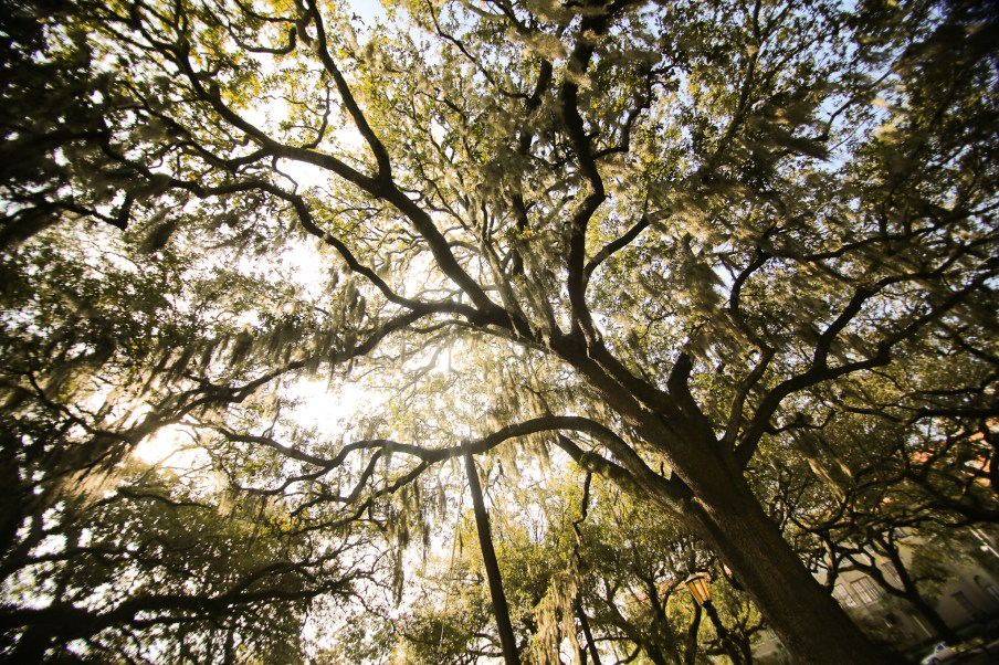 Looking up yields spectacular views of dreamy, oak trees enveloped with soft spanish moss.