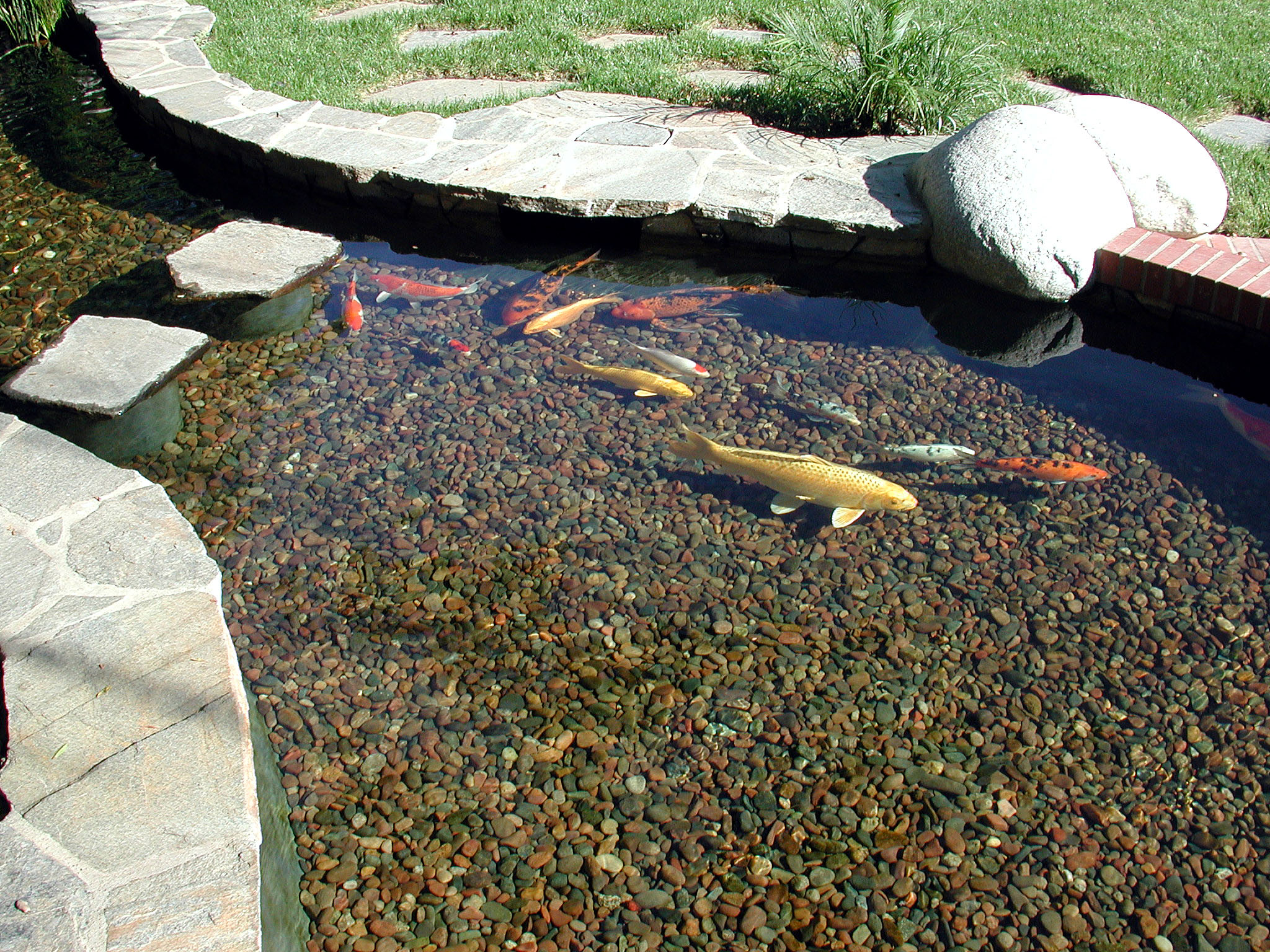 Professional koi pond construction and repair in pasadena for Artificial fish pond