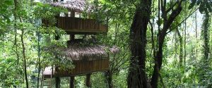 Finca Bellavista: A Tree House Community
