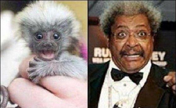 Monkey looks like Don King