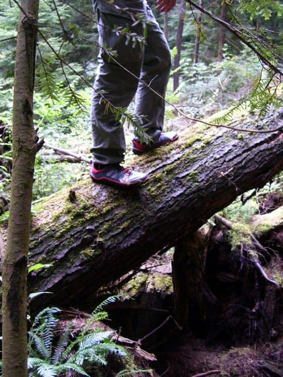 Vivobarefoot on a tree