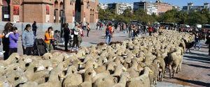 Transhumance Festival in Madrid, Spain