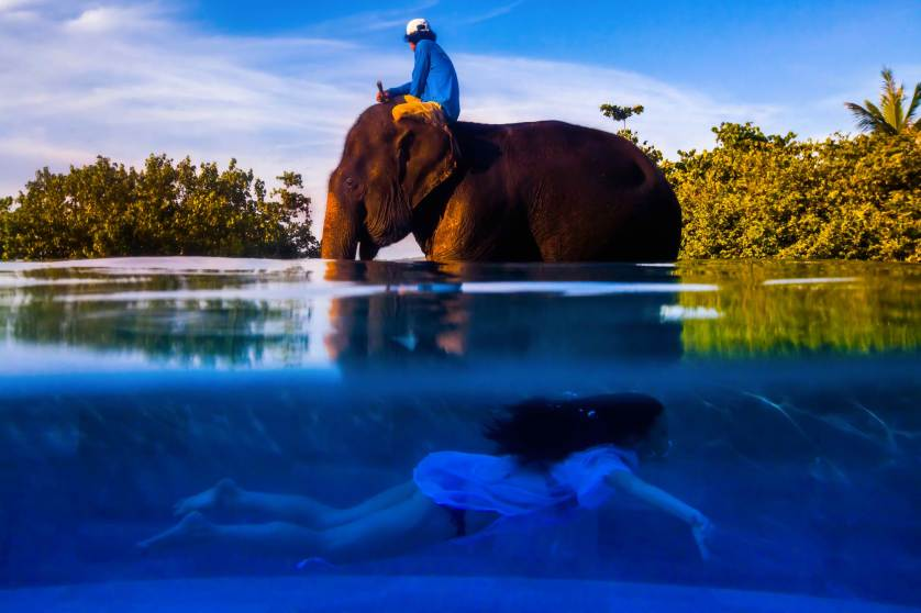 'The Elephant and the Swimmer' by Justin Mott