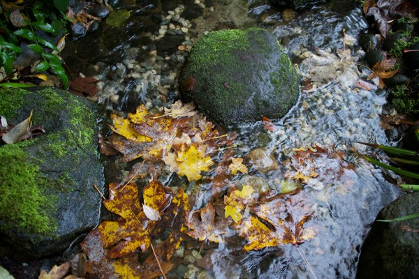 07 maple leaves in stream