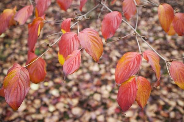 01 leaves