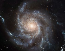 "This Hubble image reveals the gigantic Pinwheel Galaxy (M101), one of the best known examples of ""grand design spirals,"" and its supergiant star-forming regions in unprecedented detail. Astronomers have searched galaxies like this in a hunt for the progenitors of Type Ia supernovae, but their search has turned up mostly empty-handed. Credit: NASA/ESA"