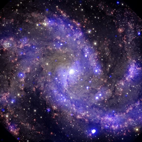 Composite image of NGC 6946, a spiral galaxy 22 million light years from Earth. At least eight supernova have exploded in this galaxy in the past century, including three spotted by Chandra (purple). Optical data is also visible in red, yellow and cyan from the Gemini Observatory. Credit: X-ray: NASA/CXC/MSSL/R.Soria et al, Optical: AURA/Gemini OBs